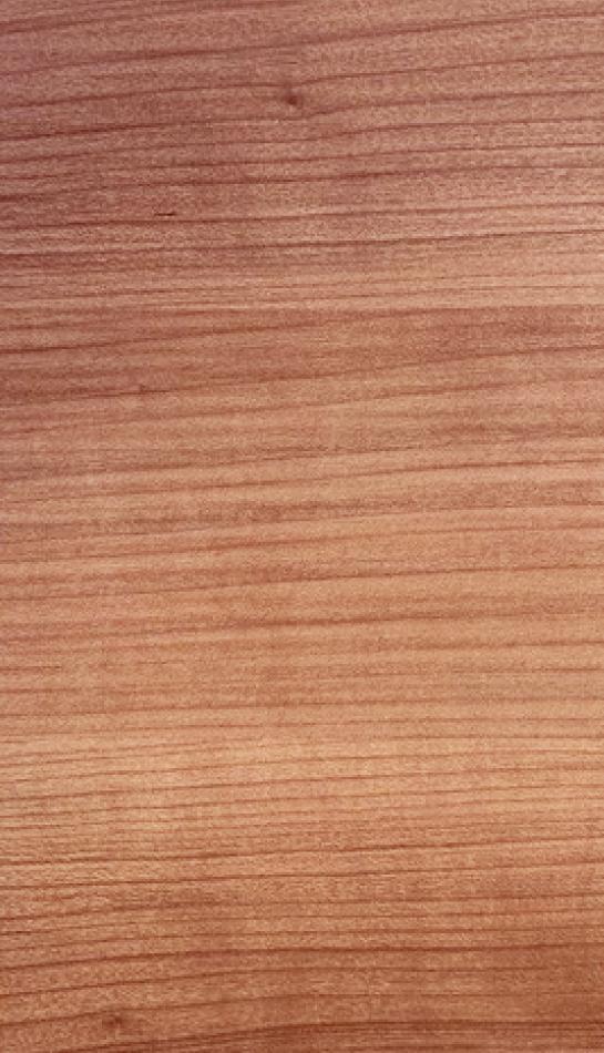 ciliegio-marabella-2n